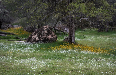 "Spring in the Sierra Foothills ""Spring is in the Air"" Pacific Art League April 2015"