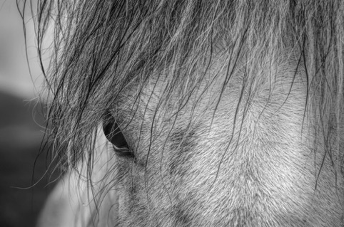 "Mind of a Horse ""A New View: A Photography Exhibit"" Pacific Art League November 2016"