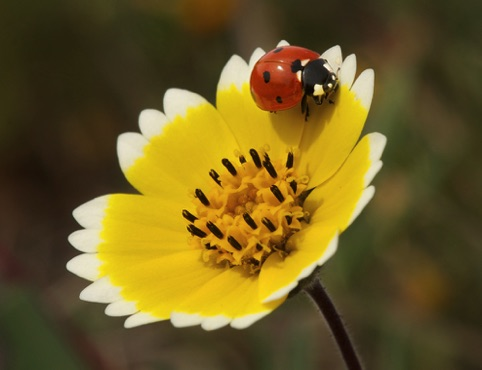 Ladybug on Tidy Tip Expressions Magazine 2015 North American Nature Photography Assn.