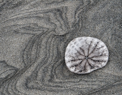 Sand Dollar Expressions Magazine 2015 North American Nature Photography Assn.
