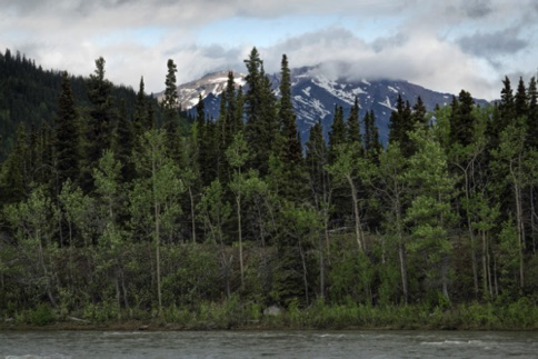 View along the Nenana River