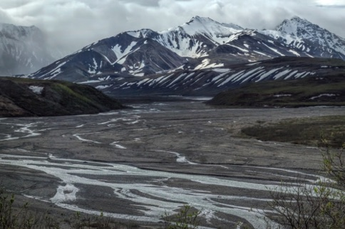 Along the Denali Road