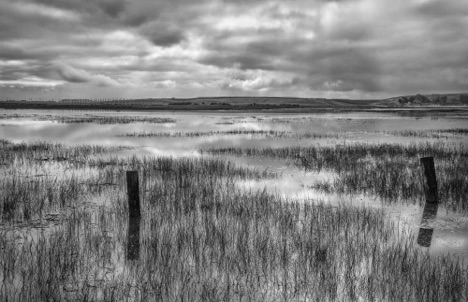 King Tide at Palo Alto Baylands