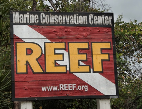 Reef Environmental Education Foundation Key Largo